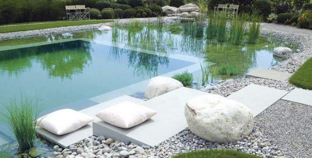 plantes-piscine